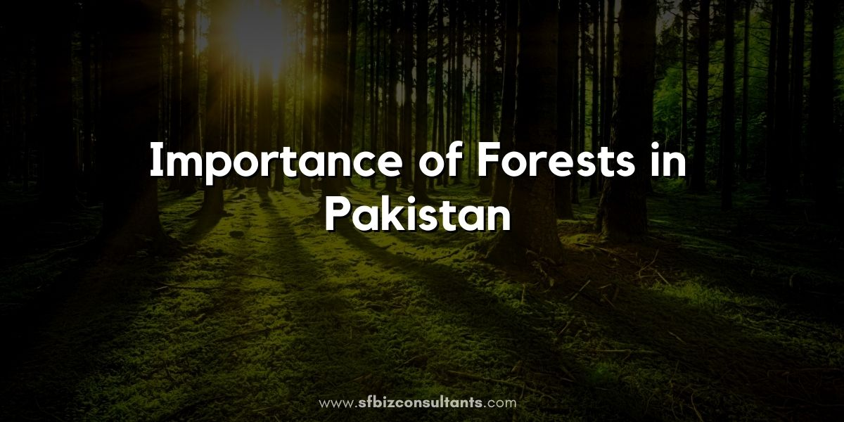 Importance-of-Forests-in-Pakistan